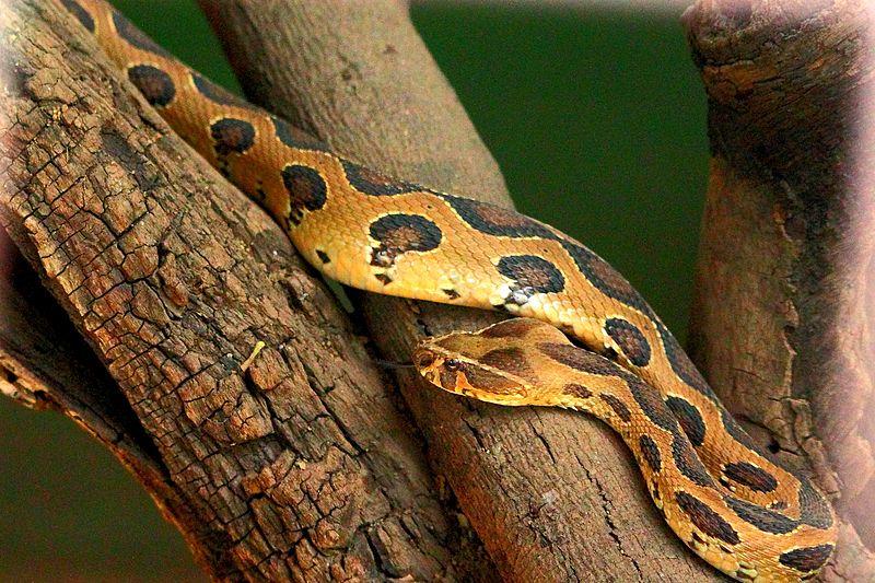 - katraj-snake-park-images-photos-52d4fc97e4b02b3ce7d57fa3